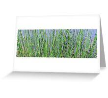 Green sedge. Greeting Card