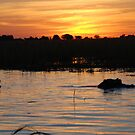 Hippos at Sunset, Chobe National Park, Botswana by Adrian Paul