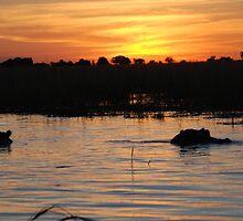 Hippos at Sunset, Chobe National Park, Botswana by Adrian Paul