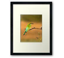 Rainbow Bee Eater. Framed Print