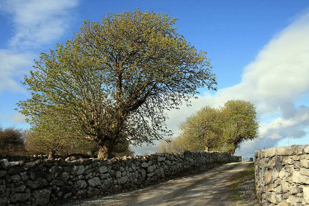 Scenic rural path by John Quinn