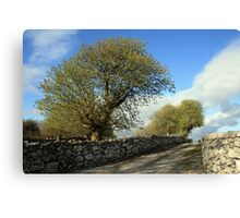 Scenic rural path Canvas Print