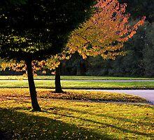 Sunrise light in Willen, MK by George Parapadakis (monocotylidono)
