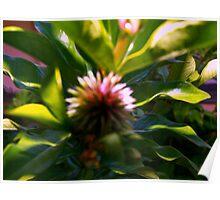 Soft flower pod Poster