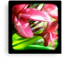 Frangipani Delight TtV Canvas Print
