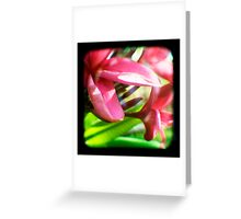 Frangipani Delight TtV Greeting Card