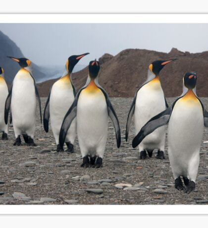 King Penguins on Parade Sticker