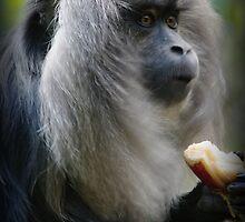 Monkey by Wzard