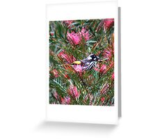 New Holland Honey Eater! Greeting Card