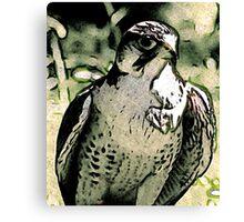 Falcon #2 Canvas Print
