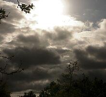 The Promise of Rain by Sandra Chung
