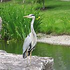 Heron by wanda1505