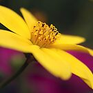 Heartfelt by Purplecactus