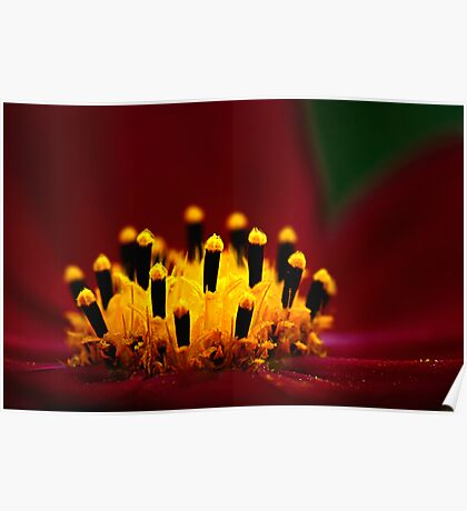 Cosmos Candles Poster