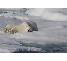 Resting Cubs Photographic Print