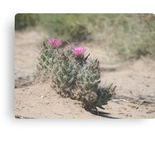 Big Bend Blooming Cacti Canvas Print