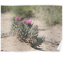 Big Bend Blooming Cacti Poster