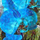 A Fine Blue Orchid Dream by Lynda Lehmann