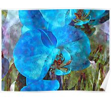 A Fine Blue Orchid Dream Poster