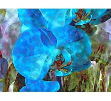 A Fine Blue Orchid Dream Photographic Print