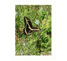 Swallowtail Butterfly#2 Art Print