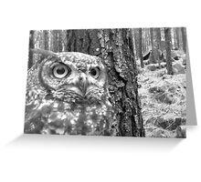 owl1 Greeting Card