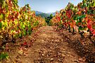 Colorful vineyard by Patrick Morand