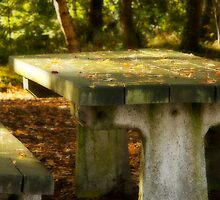 Woodland Bench by Lee West