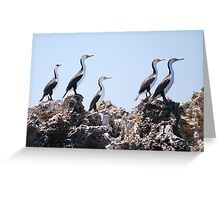 Sentries on guard - Pied Cormorants Greeting Card