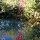 Fall Mirror by tkrosevear
