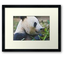 Stylized photo of Bai Yun, a giant panda. Hers was the first successful birth of a giant panda at the Wolong Giant Panda Research Center in China.  Framed Print