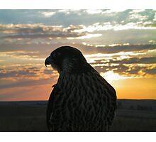 falco3 Photographic Print