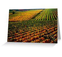 Golden vineyard  Greeting Card