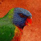 Rainbow Lorikeet by Gili Orr