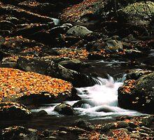 MOUNTAIN STREAM,AUTUMN,GREAT SMOKY MOUNTAINS NP by Chuck Wickham