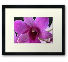 The Heart Of The Orchid Framed Print