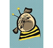Bumble Pug Photographic Print