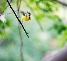 Take-off! by sara montour