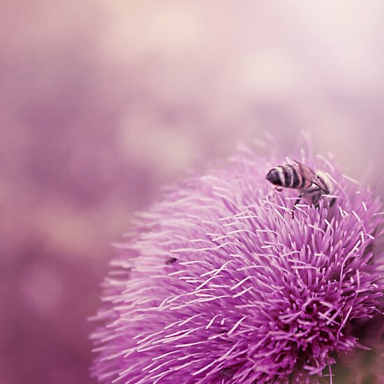 Beauty and the Bee by Trish Mistric