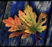 Falling for colour by Linda Sannuti