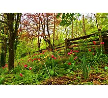 Fresh and Colorful Hillside - Impressions Of Spring Photographic Print