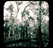 Bush Country by Jules Campbell