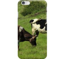 Cows on a Farm iPhone Case/Skin