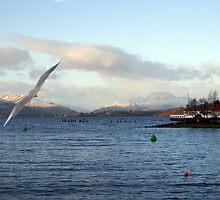 Looking North on Windermere by trish725
