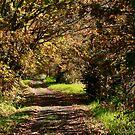 Autumn Walk by 3rdCulture