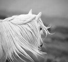 Windswept by Mitch  McFarlane