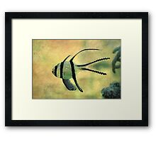fishy 02 Framed Print