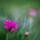 Pink by Mitch  McFarlane