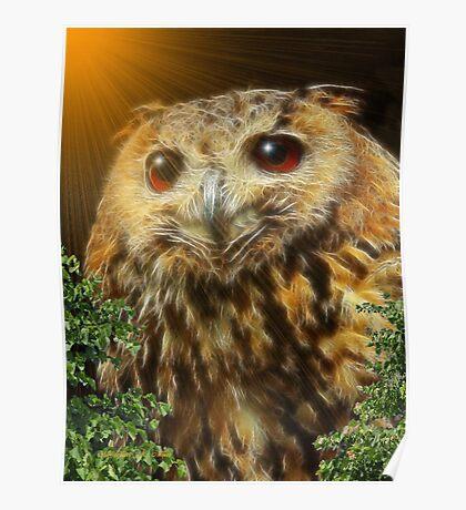 ~ HOOT HOOT OWL ~ Poster