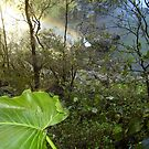 Rainbow in Beautiful Rainforest Mountains! by MardiGCalero
